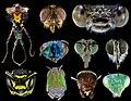 Головы насекомых под микроскопом.jpg