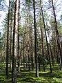 Лес mežs - panoramio - Aleksandrs Timofejev… (2).jpg