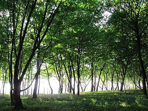 Svetlogorsky District - Yantarny Park, a protected area of Russia, in Svetlogorsky District