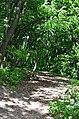 Парк Берёзовая роща в Киеве. Фото 28.jpg