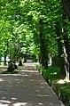 Парк Берёзовая роща в Киеве. Фото 8.jpg