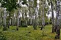 Парк відпочинку Берізка 05.jpg
