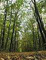 """Просіка вздовж лісового масиву """"Чорний ліс"""".JPG"""