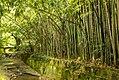 Сухуми Ботсад - panoramio (1).jpg