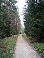 Тропа к платформе Подосинки - panoramio.jpg