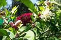 פרחים בישראל (47).JPG