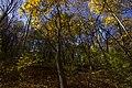پاییزدر ایران-قاهان قم-Autumn in iran-qom 19.jpg