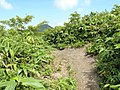 中面白山 2012-08-12 - panoramio.jpg