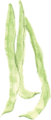 四季豆greenbean.png