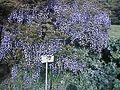 小石川植物園 - panoramio (1).jpg