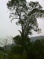 文殊完小 - panoramio.jpg