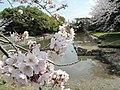 赤穂城士の桜 - panoramio.jpg