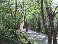 锁岛上的小路 - panoramio (1).jpg