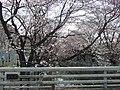麻生川・山口橋 - panoramio.jpg