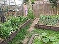 -2020-07-01 Vegetable garden with raised beds, Trimingham, Norfolk (2).JPG