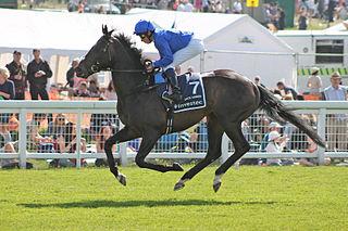 Jack Hobbs (horse) British-bred Thoroughbred racehorse