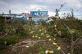 07.10 尼伯特颱風過境後,造成台東農作受損 (28235850915).jpg