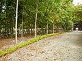 09763jfHighway Pangasinan Church Roads Binalonan Landmarksfvf 13.JPG