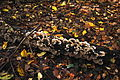 12-10-21 Dreieich Pilze 26.jpg