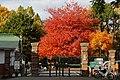 131103 Hokkaido University Sapporo Hokkaido Japan01s3.jpg
