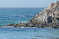17-Mile Drive Bird Rock 03 2013.jpg