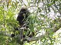 1 Monkey 11.JPG