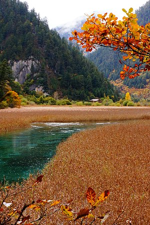 Jiuzhaigou - Reed Lake is a reed-covered marsh with a clear turquoise brook zigzaging through it