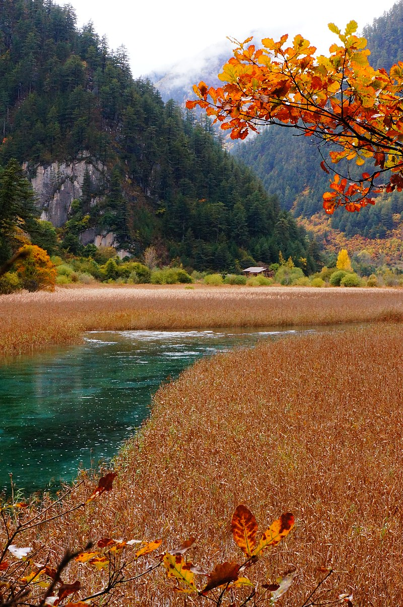 1 jiuzhaigou valley reed lake 2011.JPG