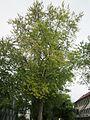 20120828Bismarckstr Saarbruecken3.jpg