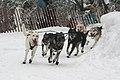 2012 Iditarod (6950516747).jpg