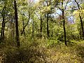 2013-05-04 12 54 02 Woodlands along the Assunpink Creek in Robbinsville, New Jersey.JPG