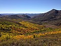 2014-10-04 13 53 21 View of Aspens during autumn leaf coloration from Charleston-Jarbidge Road (Elko County Route 748) in Copper Basin about 10.3 miles north of Charleston, Nevada.jpg