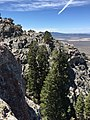 2015-04-28 12 51 14 Large White Firs just below cliffs at the highest point in the south wall of Maverick Canyon, Nevada.jpg