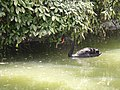 2015-05-29 Paris, Parc Montsouris 15.jpg