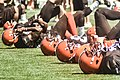 2016 Cleveland Browns Training Camp (28614621811).jpg
