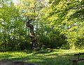 2017-05-10 Naturdenkmal 1 Stieleiche mit Andachtsstätte 1.jpg