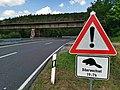 2019-08-04 Autofreier Sonntag im Lieblichen Taubertal 23 Gamburg-Bronnbach - Biberwechsel.jpg