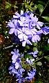 20200527 203640 flowers7848.jpg