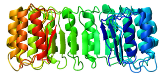 Ribonuclease inhibitor - Image: 2bnh sideview