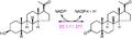 3β-hydroxy-5β-steroid dehydrogenase reaction.PNG
