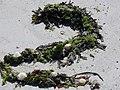 4569.Abers - Côte des Légendes , Küste der Legenden, coast of the legends- Brignogan-Plages, Finistère, Bretagne 2007 - Steffen Heilfort.JPG