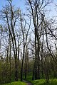65-103-5003 Голопристанський акацієвий ліс.jpg