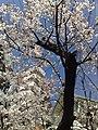 7 Chome Roppongi, Minato-ku, Tōkyō-to 106-0032, Japan - panoramio - hello-go (2).jpg