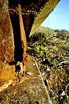 8694 Milagra Ridge (5359940856).jpg
