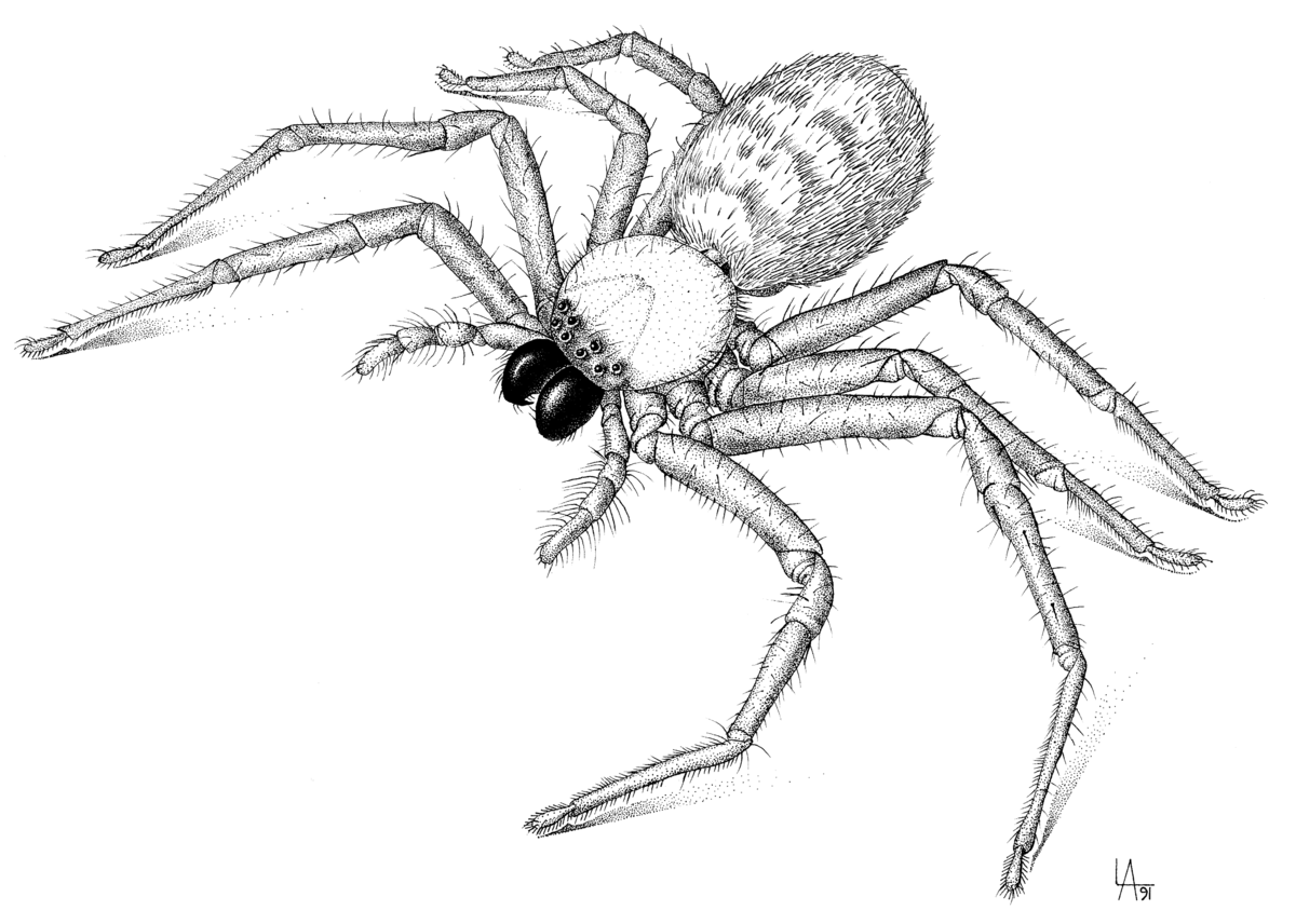 This is a picture of Inventive Drawing Of Spiders