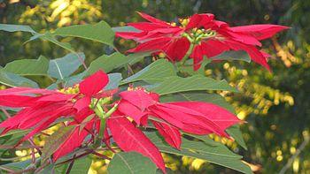 A beautiful red-green flower.jpg