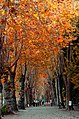 A big road with trees on the sides in the autumn twith orange leaves.jpg