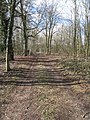 A clear woodland view - geograph.org.uk - 1744822.jpg