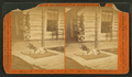 A dog lying outside a log cabin, from Robert N. Dennis collection of stereoscopic views.png