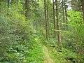 A forest walk between Dol-gochyn and Blaen Glasgwm - geograph.org.uk - 557626.jpg